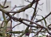 oiseaux dans ville décembre 2016