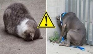 Si votre animal se comporte comme ça, appelez un vétérinaire