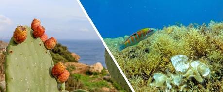 SANTÉ COGNITIVE: Les plantes méditerranéennes sources de jeunesse et d'élixir de vie – Neuroscience Letters