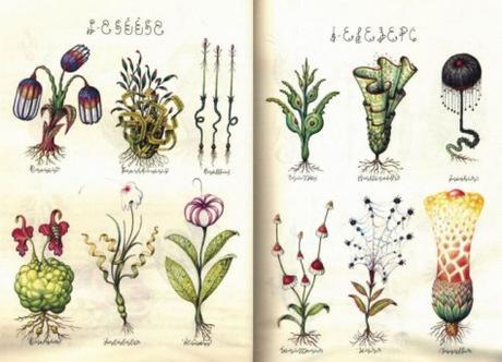 [Inspiration Etrange] Le Codex Seraphinianus