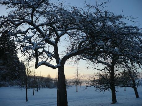 Fin janvier et début février, entretenez vos arbres fruitiers