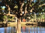 Ravissement pédagogie dans parc sculptures Fondation Clément