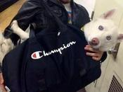 Dans métro York, chiens sont interdits sauf s'ils dans