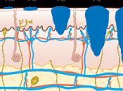#thelancetoncology #mélanome #ipilimumab Qualité liée santé sous ipilimumab adjuvant versus placebo après résection complète d'un mélanome haut risque stade (EORTC 18071) résultats secondaires essai phase multinat...