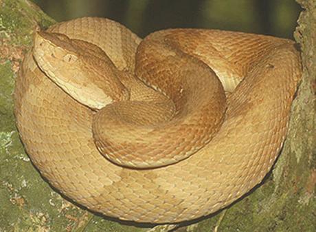 plus dangereux serpent du monde