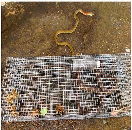 record plus dangereux serpent
