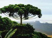 brésil considéré comme l'un mégas divers plus importants pays planète