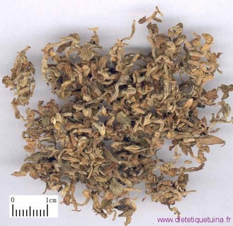 La fleur de daphné lilas (Yuan Hua)