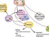 #trendsinendocrinologyandmetabolism #ocytocine Ocytocine douce hormone
