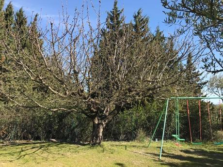 Point cerisier