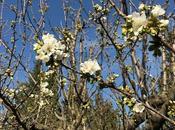 Point cerisier heures fleurs plus tard