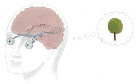 Voir avec le cerveau