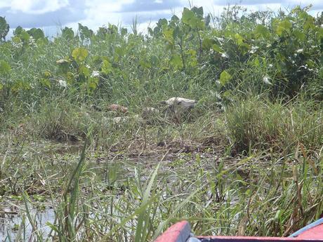 Mon voyage en Guyane  Marée de Kaw