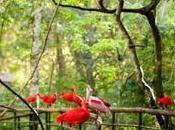 quatres attractions plus visites iguaçu vacances