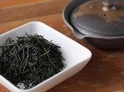 Gyokuro cultivar Gokô Kyô-Tanabe, précisions genre