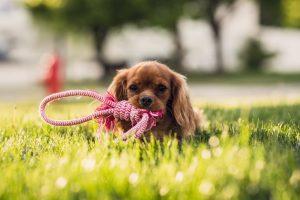 De quels accessoires mon chien a-t-il besoin pour s'épanouir ?