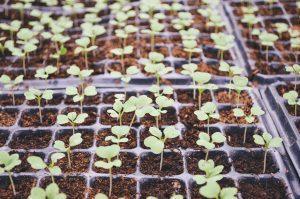 silos plantes germes