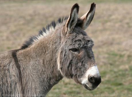 La science des ânes !