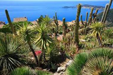 Découvrez les Jardins de la Côte d'Azur à l'occasion du 1er Festival* !