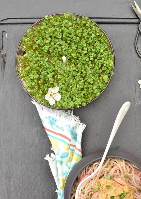 Pesto de graines germées citronné