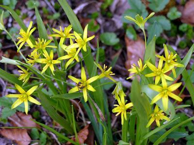 Floraisons printanières  dans le parc de Linderhof