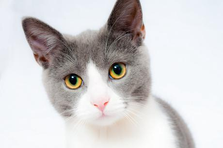 Le chat, le chien et l'illusion d'optique