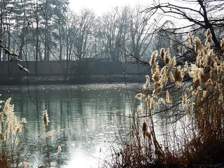 Matin d'hiver au Parc de la Tête d'Or