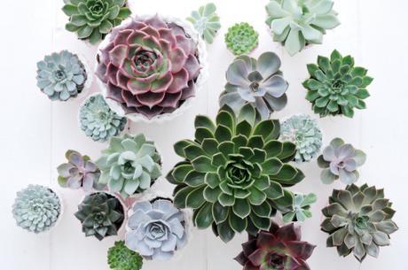 Succulentes_04