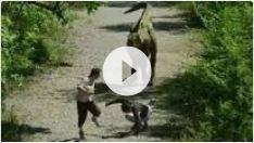 Rémi Gaillard et le tyrannosaure - Tarzan sème le trouble au zoo + Reportage - 3 videos