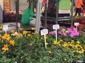 Salon Jardin Fête Plantes, pour mettre vert