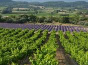 Classique Ventoux rosé 2016 Marrenon