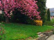 Notre cerisier forme