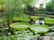 Moitié prix dans jardins Royaume-Uni Irlande