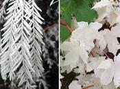 L'albinisme chez plantes, mutation naturelle étonnante