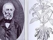 Potager d'un curieux Plantes comestibles, connues inconnues