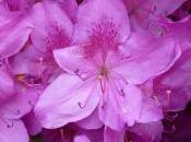 fleurs exeptionnelles