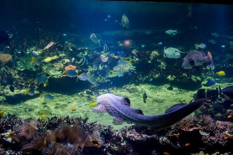 Voyage \ Bienvenue sur la Côte d'Opale