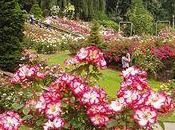 Visite dans Vancouver: Queen Elisabeth Park, Rose Garden Conservatoire Bloedel