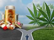 STRESS cannabis, peut-être, mais trop Drug Alcohol Dependence