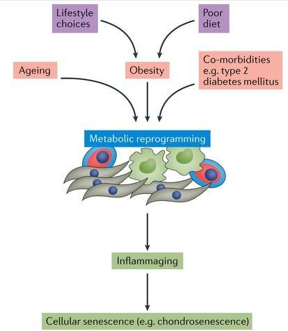 ARTHROSE : On pourra bientôt évaluer son risque – NPJ Systems Biology and Applications