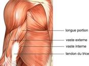 Tendinite triceps brachial causes, symptômes traitement