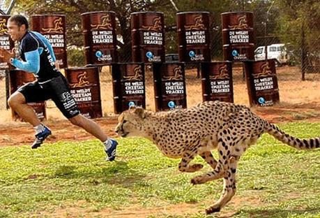 Ces sportifs qui se frottent à des animaux