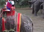 Surin, novices participent céremonie prosperité avec éléphants (reportage)
