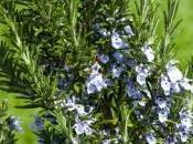 plantes repoussent moustiques