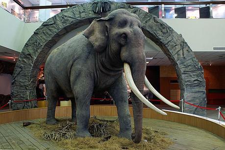 Linwang, 86ans, l'éléphant asiatique qui a vécu le plus longtemps au monde