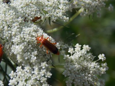 Au secours, les insectes disparaissent !!