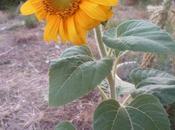 fleuri week