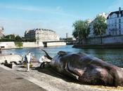 Paris cachalot échoué bords Seine