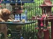 Thaïlande, fantome peut deposé plainte contre chien