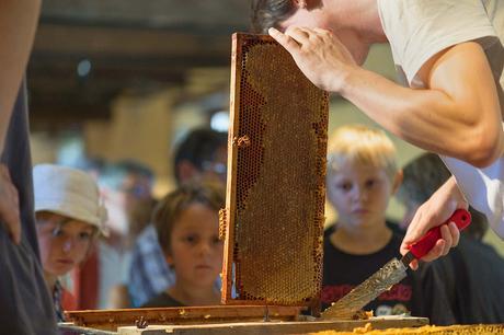 Écomusée du pays de Rennes : récolte annuelle de miel